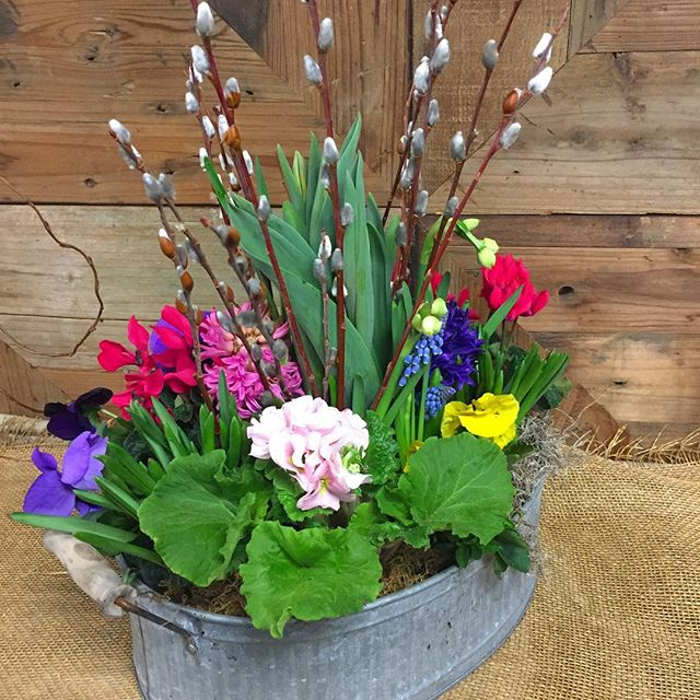 Spring Plant Mix
