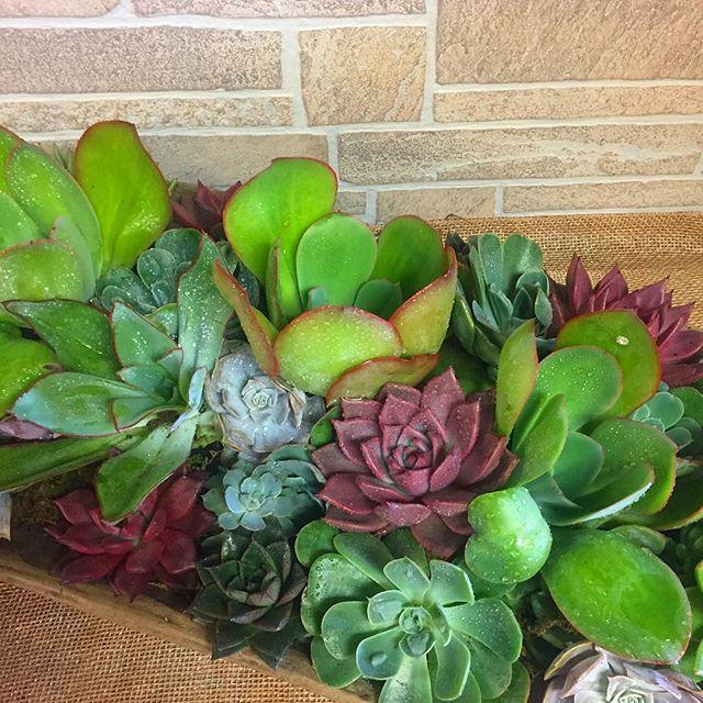 Textural Succulents