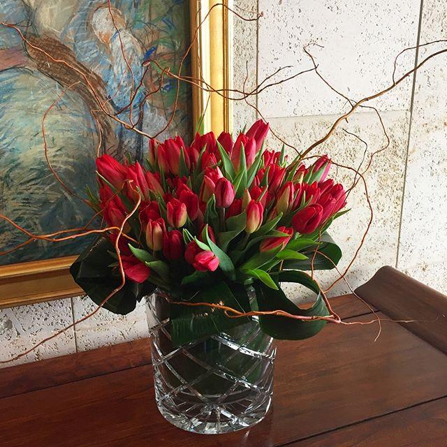It's tulip time !