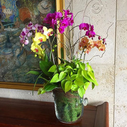Phalaenopsis Orchid/Plant combo