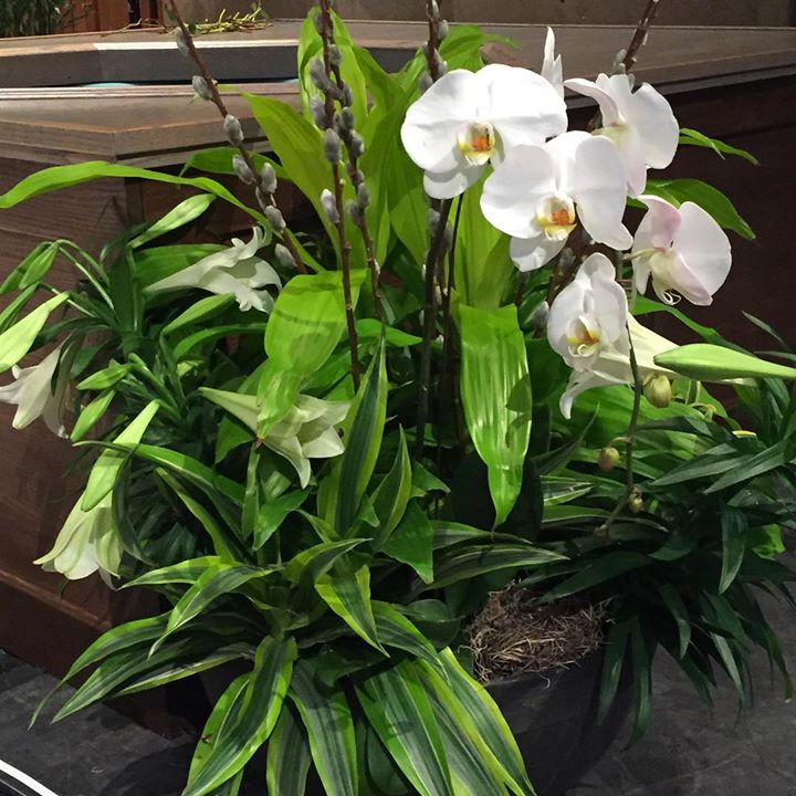 Plant with Orchids