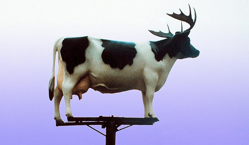 cow-on-pole-1200-blue.jpg