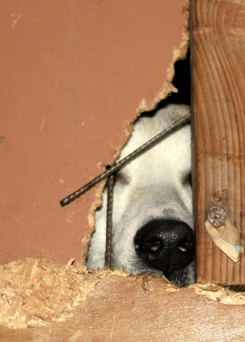 Hund in unserer Auffangstation in Bukarest