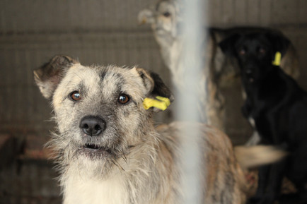 Hund im Public Shelter Valcea