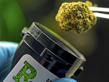 Why do most patients use medical marijuana? Chronic pain.