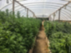 drstrains-greenhouse.jpg