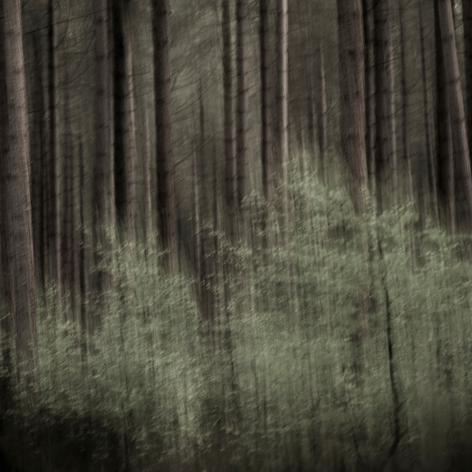 IN THE DEPTH OF THE FORREST