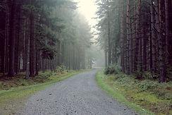 Camino de la grava en el bosque