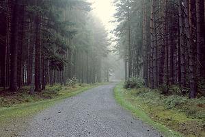 Gravel Road in den Wald