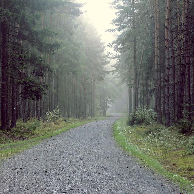 森への砂利道