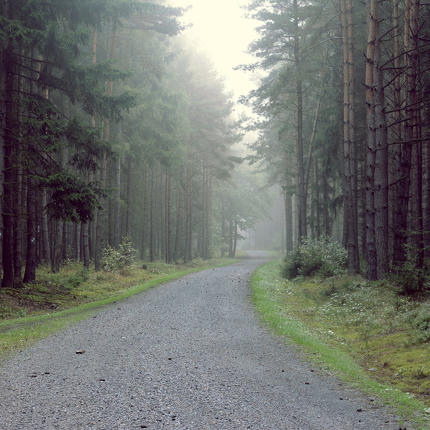 Gravel Road into the Forest