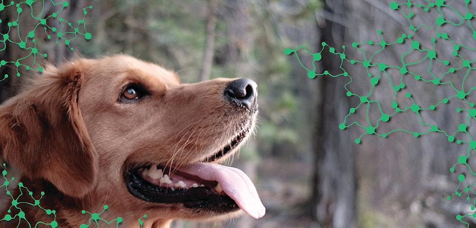 dog new 1.jpg