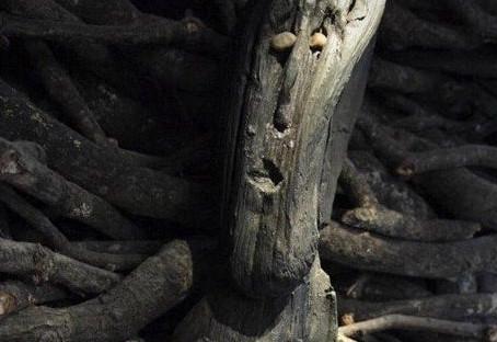 2021.02.05 Alder Tree