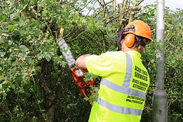 tree maintenance.JPG