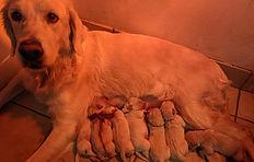 Chessa and 7 pups Dec. 30, 2020.jpg