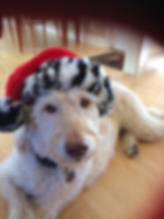 Stella with Santa hat dec 2018.JPG