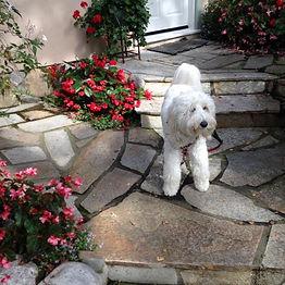 Mikey in Carmel.jpg
