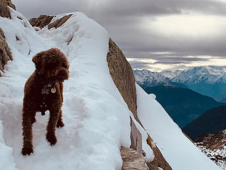 Ted Guise on mountian in Switzerland.jpg