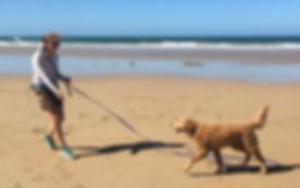 PP_dogwalking.jpg