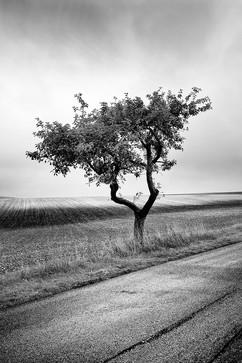 ©JEAN-MARC CEDILE