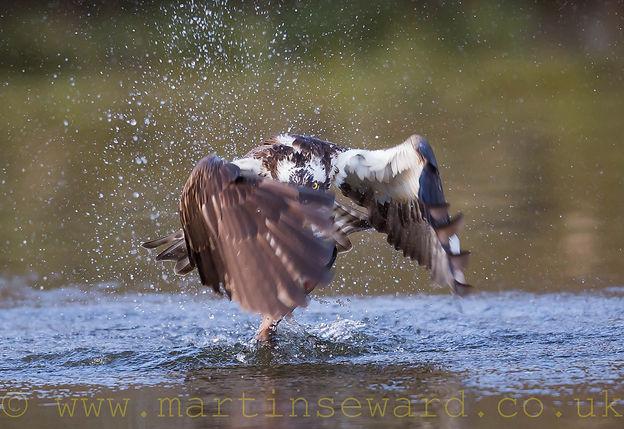 Martin Seward Wildlife Photography