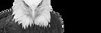 eagle_edited.png