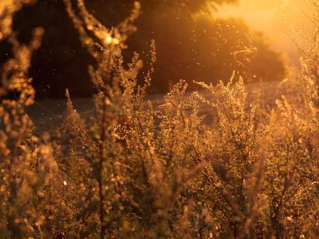 Chinese Herbs Can Help Curb Seasonal Allergies