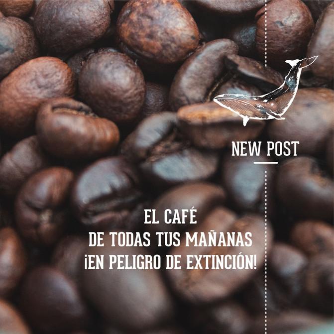 EL CAFÉ DE TODAS TUS MAÑANAS ¡EN PELIGRO DE EXTINCIÓN!