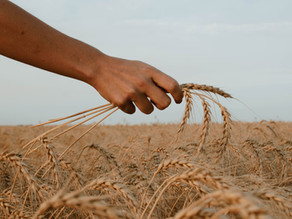 """""""The Harvest is Abundant, but the Laborers are Few!"""" Matthew 9:37, By Paul DeCamara"""