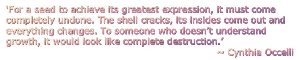 CynthiaOccelliQuote1_edited.png