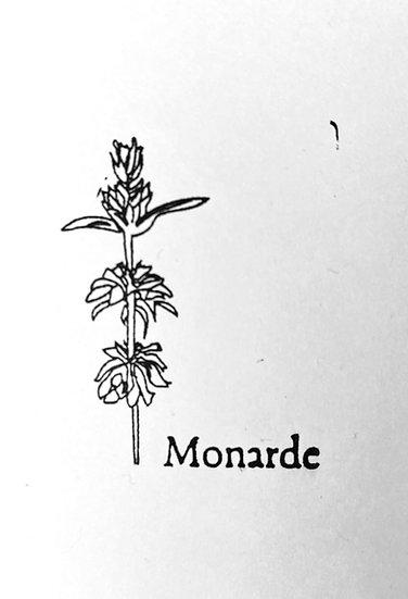Graines : Monarde , la queen du 93 !