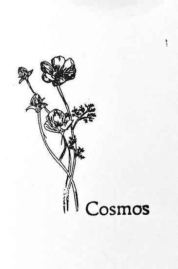 Graines : faites pousser nos cosmic flower dans votre maison !