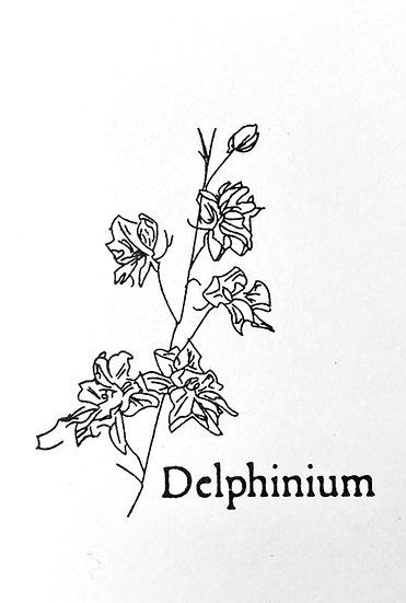 Graines : Delphinium, faites place à nos pieds d'alouette du 9.3.