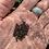 Thumbnail: Graines : Delphinium, faites place à nos pieds d'alouette du 9.3.