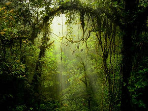TOP-4-COSTA-RICA-CLOUD-FORESTS-1-1.jpg