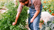 Plants are for life - Phytochemicals