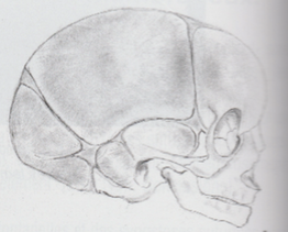 Ostéopathe tête plate à Nimes