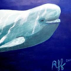 (SOLD) Belugas