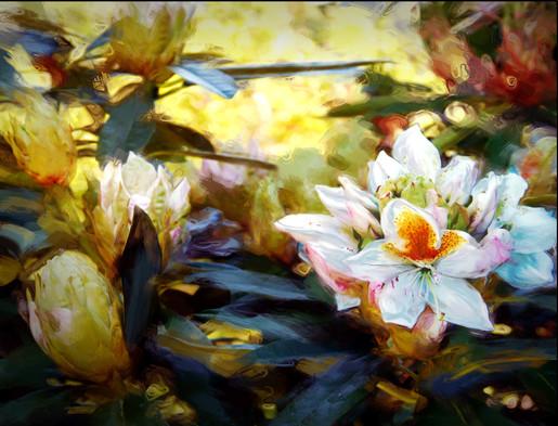 Spring Rhody