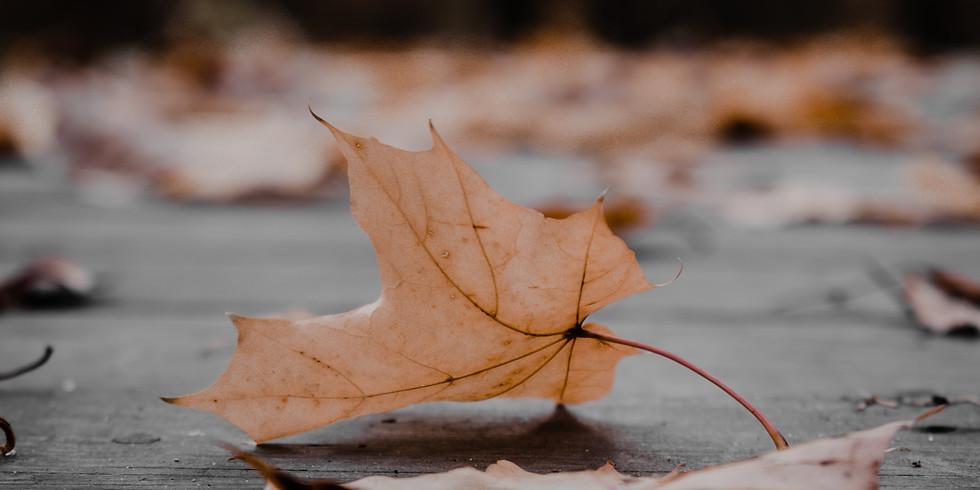 Soulful Aging: An Autumn Retreat