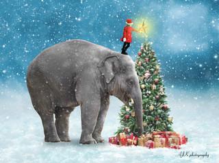 Juliette elephant Christmas tree fb.jpg