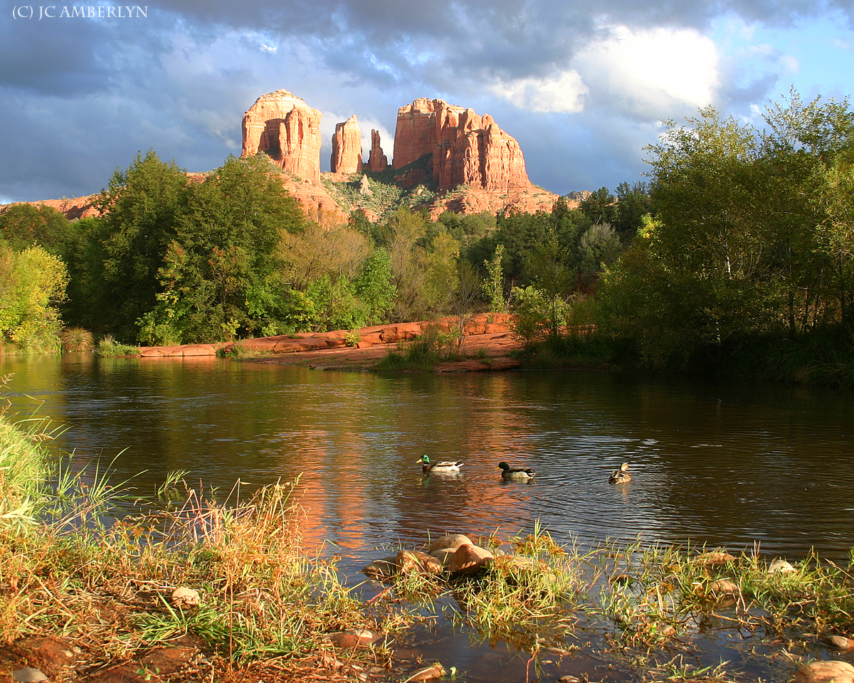 Sedona Ducks