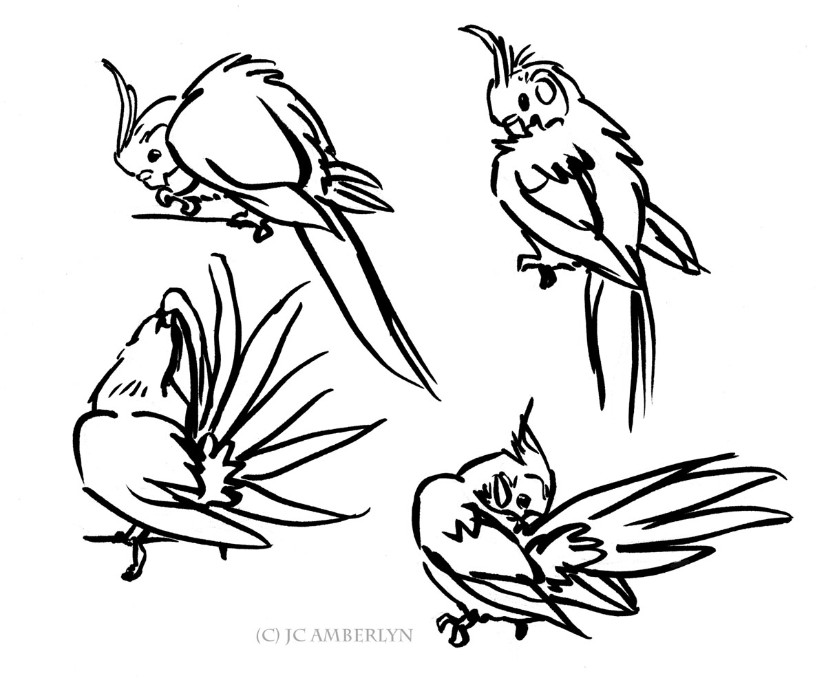 Cockatiel Sketches