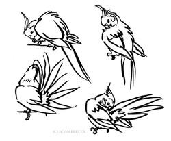 Cockatiel Sketches