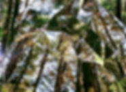 2004superficielle3_large.jpg