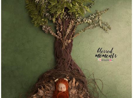 Newborn Photography - Damian - little Fox