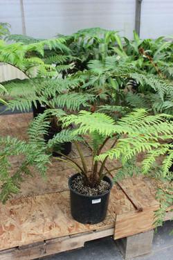 Indoor / Tropical Plants