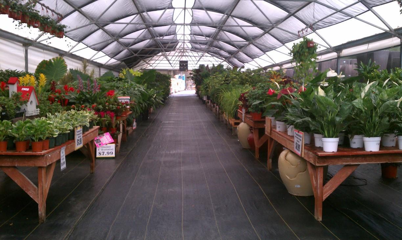 Indoor / Tropical Plant Greenhouse