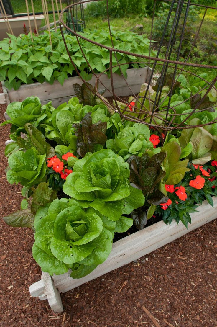 Legumes A Mettre Dans Le Jardin associer fleurs, herbes aromatiques et légumes pour protéger