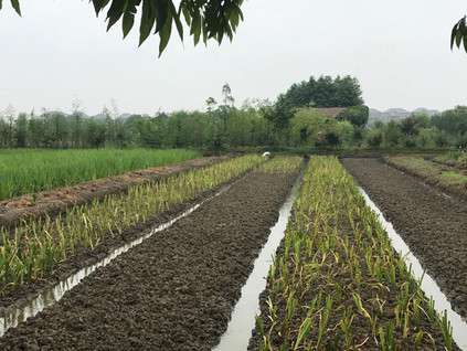 SMARTLAND visits wetland vegetation nursery in Hangzhou